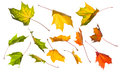 Collection of autumn leaves Royalty Free Stock Image