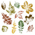 Collection of autumn leaves imprints can used as elements your design Stock Images