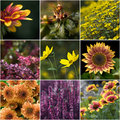 Collection of autumnal flowers Stock Photos
