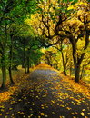 Collection of beautiful colorful autumn leaves poland Royalty Free Stock Images