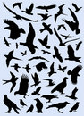 Collection of birds vector Stock Photo