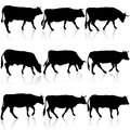 Collection black silhouettes of cow. Vector illustration. Royalty Free Stock Photo