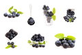 Collection of blue berry Royalty Free Stock Photo
