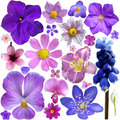 Collection of blue purple flowers isolated on white background Stock Photos