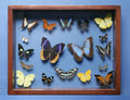 Collection of butterflies Stock Image