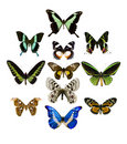 Collection of butterfly Royalty Free Stock Images