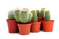 Collection of cactuses in pots Stock Photo