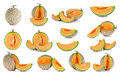 Collection cantaloupe melon fruit isolated on the white backgrou Royalty Free Stock Photo