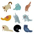 Collection of cat icons vector image Stock Photo