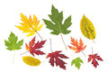 Collection of colorful autumn leaves Stock Photography