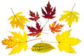 Collection of colorful autumn leaves isolated on white background Stock Photography