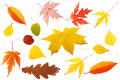 Collection of colourful leaves Stock Photography