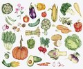 Collection of colourful vegetable illustration Royalty Free Stock Photo
