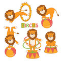 Collection of cute circus lion on white background vector illustration Stock Images