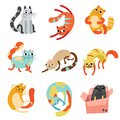 Collection of Cute Funny Cats in Different Poses Vector Illustration
