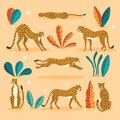 Collection of cute hand drawn cheetahs on pink background, standing, stretching, running and walking with exotic plants Royalty Free Stock Photo