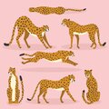 Collection of cute hand drawn cheetahs on pink background, standing, stretching, running and walking. Vector illustration Royalty Free Stock Photo