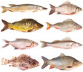 Collection de poissons Photographie stock
