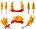Collection of design elements. Wheat Stock Photos