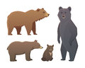 Collection with different cartoon bears isolated on white background. Vector broun and black american bear. Set Wildlife
