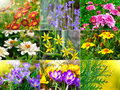 Collection of different flowers background Stock Photo