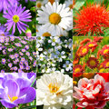 Collection of different flowers camomile gypsophila repens crocus chrysanthemum dahlia Stock Photo