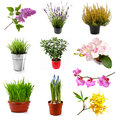 Collection with different flowers and plants, isolated on white Royalty Free Stock Photo