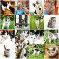 Collection of different funny kitten with several photos Stock Image