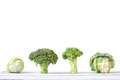 Collection of different varieties of cabbage.. Royalty Free Stock Photo