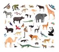 Collection of exotic wild animals isolated on white background. Bundle of fauna species living in savannah, jungle and Royalty Free Stock Photo