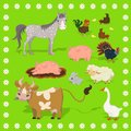 Collection of farm animals sheep, rabbit, cow, pig, rooster, chicken, turkey, horse. Frame of flowers. Vector set of illustrations