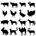 Collection of farm animals vector icon set isolated on grey background eps file available Stock Photo