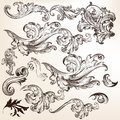 Collection of floral decorative vector swirls for design set swirl elements calligraphic Stock Photos