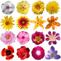 Collection of flowers Royalty Free Stock Photo