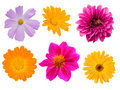Collection flowers Royalty Free Stock Photography