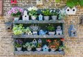 Collection of flowers and bird houses on Texel island Royalty Free Stock Photo
