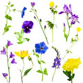 Collection flowers blue and yellow Royalty Free Stock Images