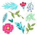 Collection of Flowers, Leaves Vector Illustration