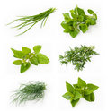 Collection of fresh herbs Royalty Free Stock Images