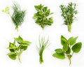 Collection of fresh herbs Stock Photo