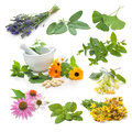 Collection of fresh medicinal herb on white background Royalty Free Stock Photography