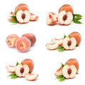 Collection of fresh peach fruits Royalty Free Stock Image