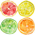 Collection of fresh ripe orange lemon lime grapefruit Stock Image