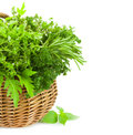 Collection of fresh spicy herbs in basket isolated vertical on white thyme basil oregano parsley marjoram rucola sage and rosemary Royalty Free Stock Image