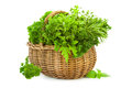 Collection of fresh spicy herbs in basket isolated on white thyme basil oregano parsley marjoram sage and rosemary Royalty Free Stock Photo