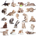 Collection of funny playful cat on white Royalty Free Stock Photos