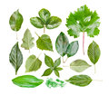 Collection of garden leaves, isolated on white Stock Photos