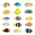 Collection grande d'un poisson tropical. Photo libre de droits