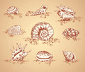 Collection graphic images seashell Royalty Free Stock Photo