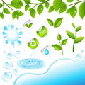 Collection Of Green Branches And Water Elements Ve Royalty Free Stock Images